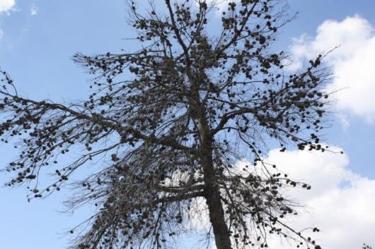 הר איתן 13.10.2011 023