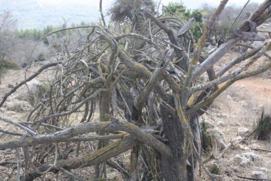 הר איתן 13.10.2011 057