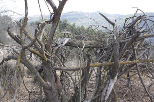 הר איתן 13.10.2011 058