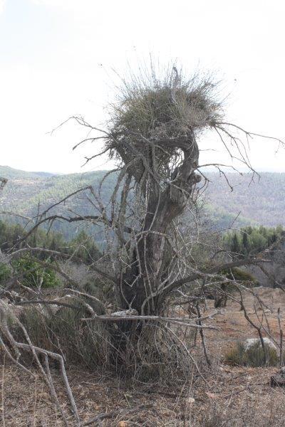הר איתן 13.10.2011 059