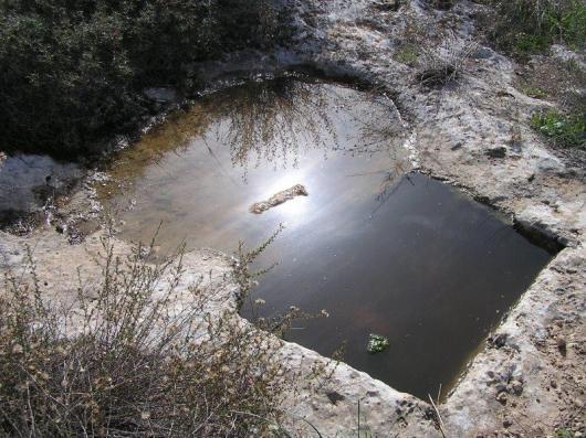 גת. מלאה מים מאירוע הגשם האחרון. ושמש גם.