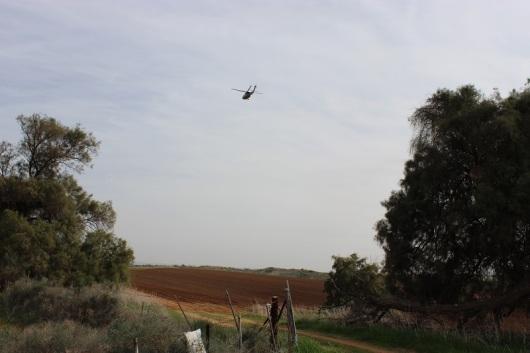ואחד מסוק/הליקופטר, מתאמן, בשדות העוטפים את השמורה, בנחיתה/המראה וחוזר חלילה.